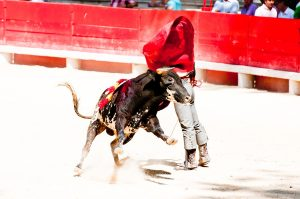 a bull fight in Tijuana
