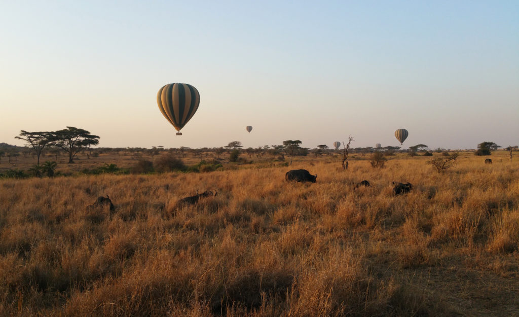 Hot air balloons over the Serengeti in Tanzania
