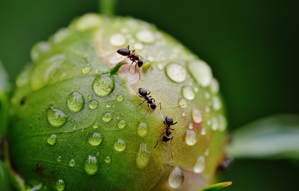 ants walking on a plant