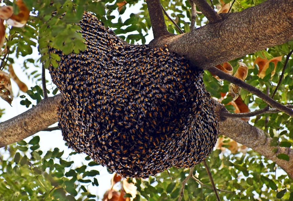a large beehive in a tree