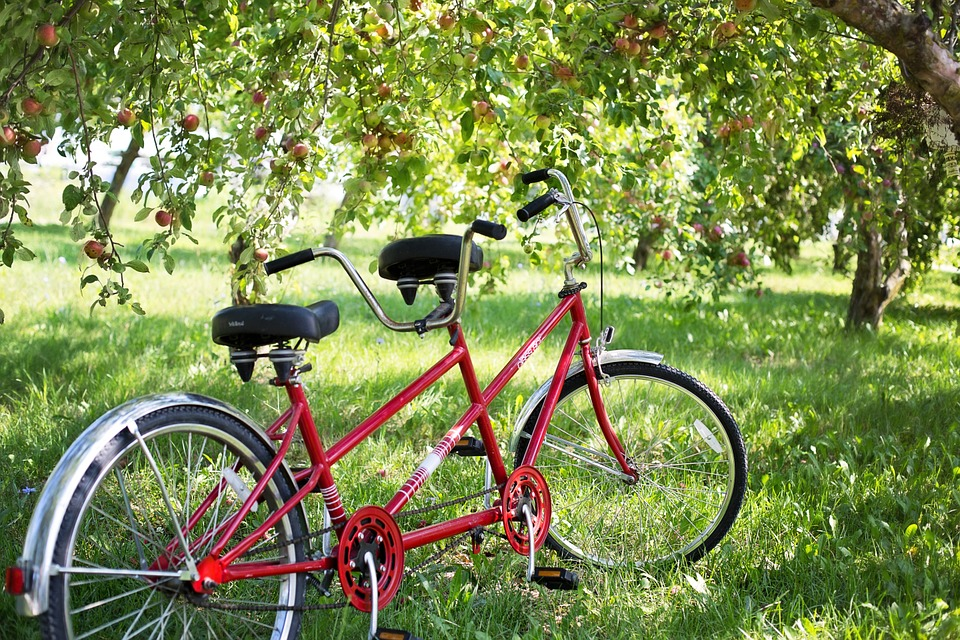 A red tandem bike under a tree